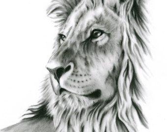 Houtskool tekening 8 x 10 originele Lion kunst door JaclynsStudio