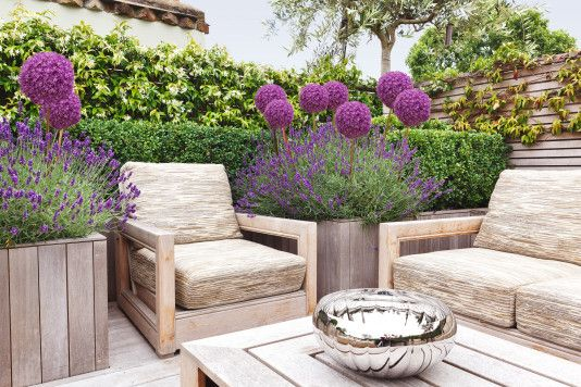 Love this idea for Lavender and Alliums incorporated into a comfortable outdoor living space! Elegant & Cozy