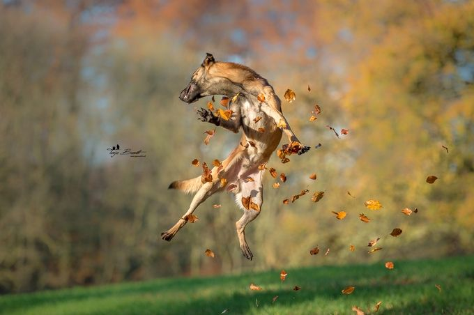 Autumn by tanjabrandt - Happy Moments Photo Contest