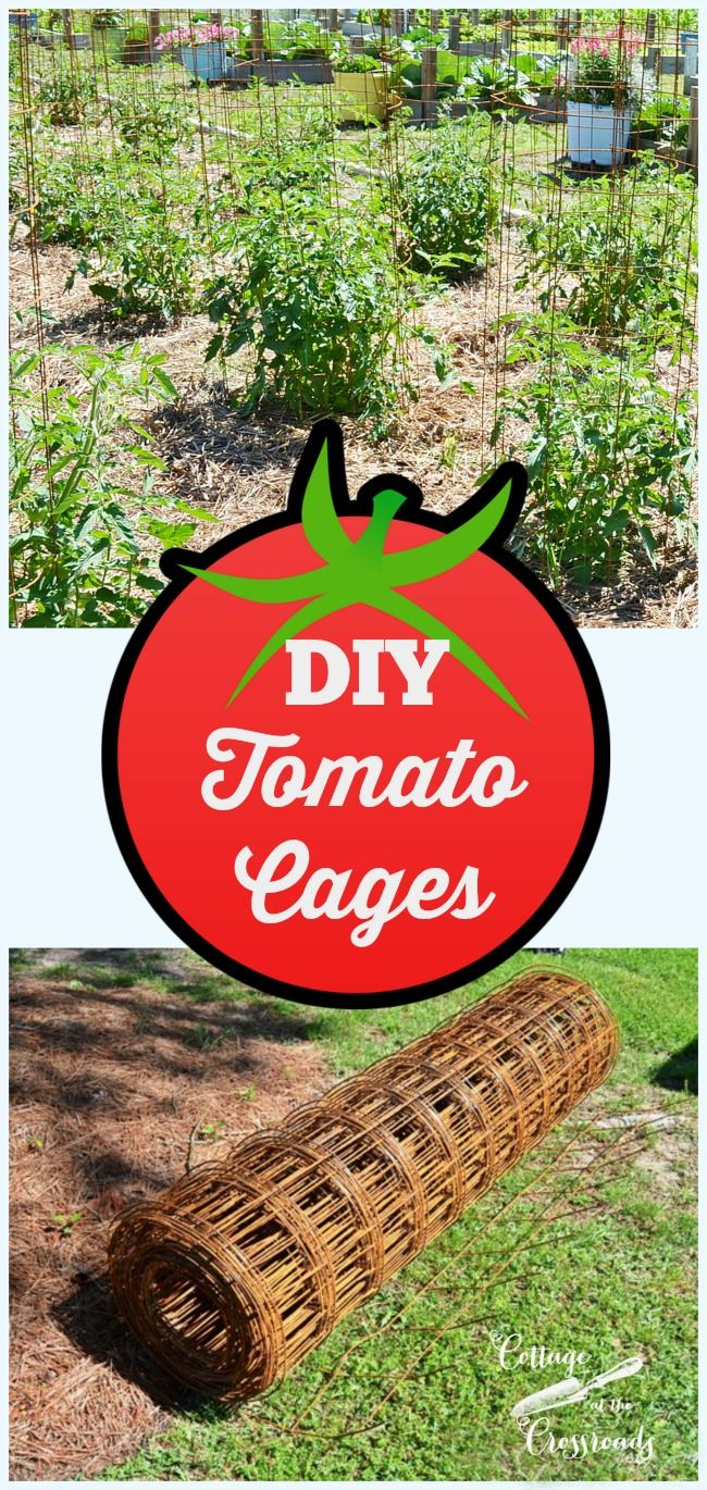 These easy to make tomato cages are sturdy and will last for many years.