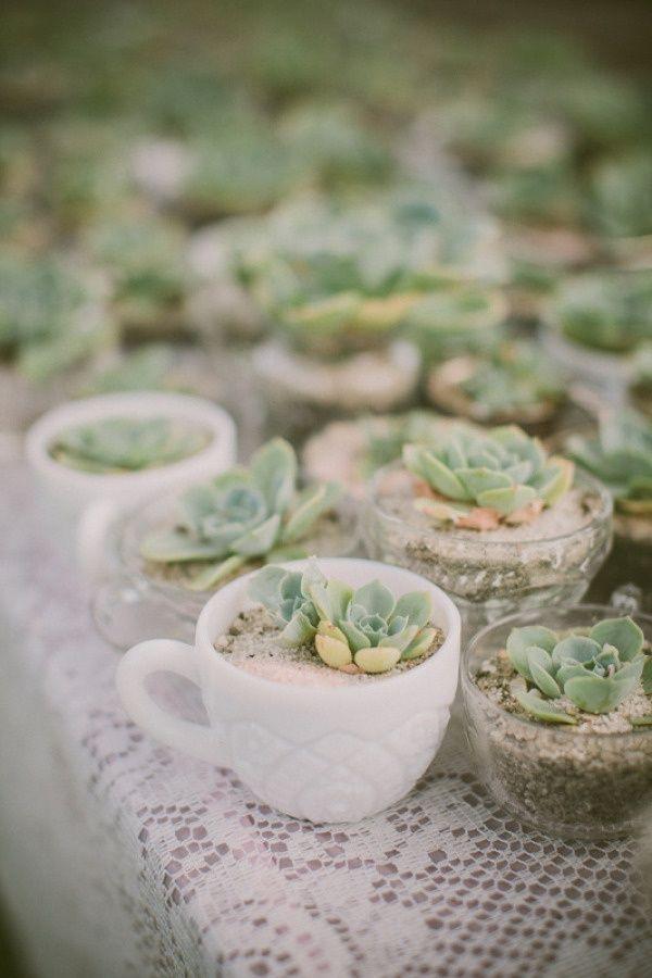 Succulent tea cups Wedding Favours