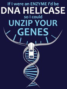 DNA Helicase OH MY GOODNESS!!!