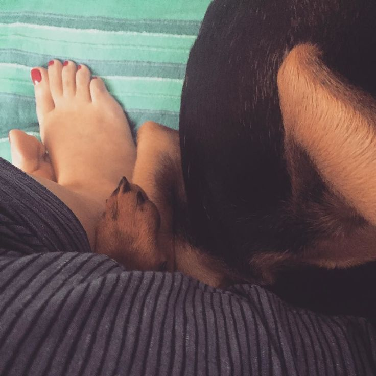 paws #humberofthestreet