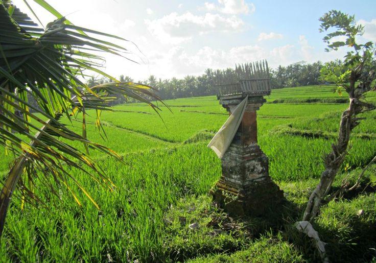 Riziere à Ubud - Blog Voyage Trace Ta Route www.trace-ta-route.com http://www.trace-ta-route.com/escapade-bali/ #tracetaroute #ubud #bali #indonesie #indonesia #rizieres #ricefields