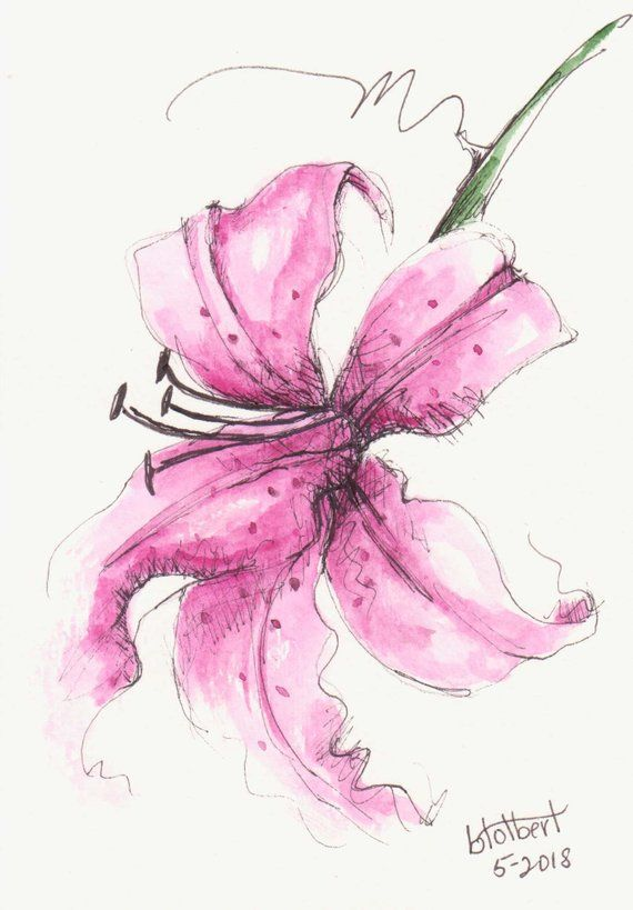 Original Artwork Of A Pink Lily Rendered In Pen Ink And