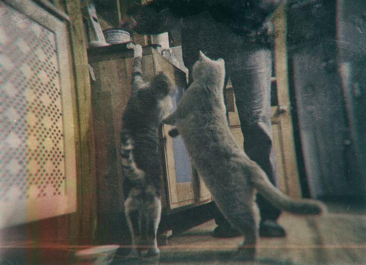 The Cats. © By Evgeny Fridgelm.