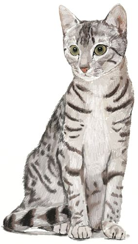 How to Draw a Cat - Draw Step by Step                                                                                                                                                                                 More