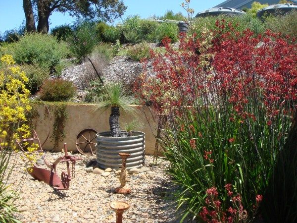 1000 images about native garden ideas on pinterest for Australian native garden design ideas