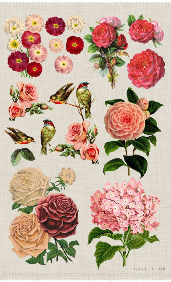 Free floral images...  great to use on bird houses...my new obsession...