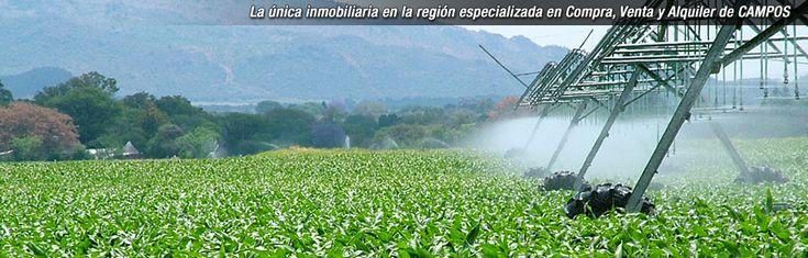 LA HERRADURA Inmobiliaria Rural Compra - Venta de campos en Argentina - SA PEREYRA 38 Has agrícolas-ganaderas. Muy buena ubicación. EN VENTA