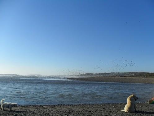 Con olor a mar y temperatura baja se despidió este miércoles 28 de noviembre 2012 en Valparaíso, Chile. Para el recuerdo una imagen de Con Con sobre el artículo: Río Aconcagua hacia el Pacífico: Estuario con presencia de Marisma. http://www.demirar.cl/2011/09/aconcagua-al-pacifico-estuario-con-presencia-de-marisma/