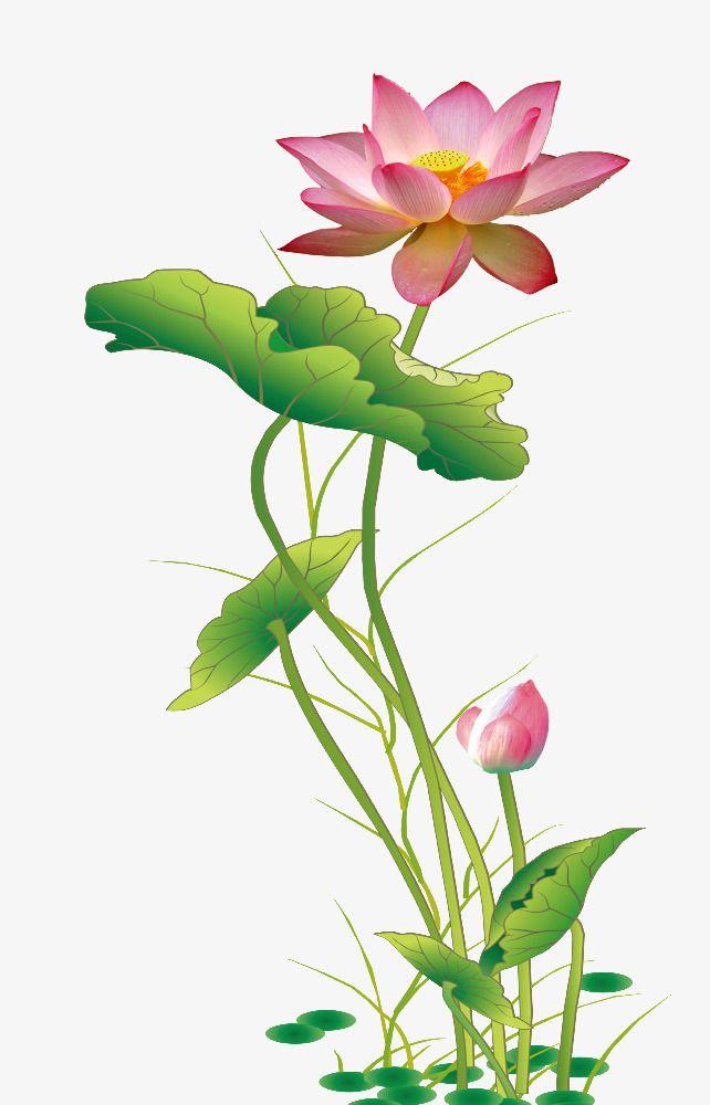 Vector Watercolor Lotus Vector And Png Lotus Flower Art Lotus Flower Painting Watercolor Lotus