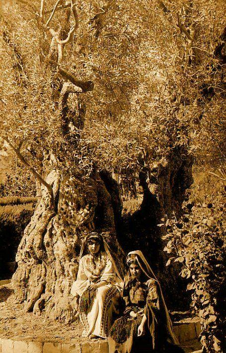 Ramallah - رام الله : Two ramallah women under an olive tree, 1890s