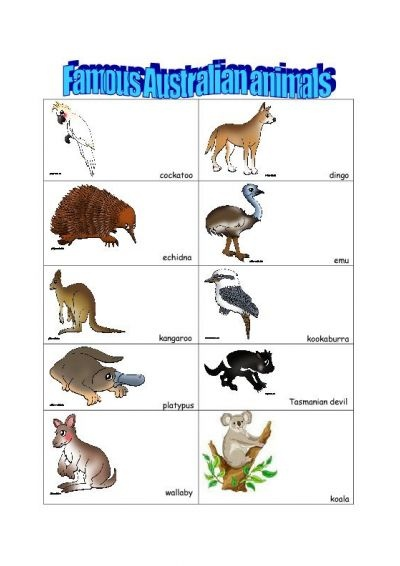 australian animals - Google Search