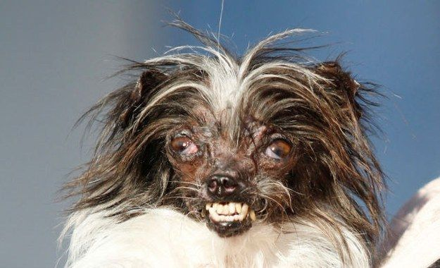 "Meet Peanut. | There Is A New ""World's Ugliest Dog"""