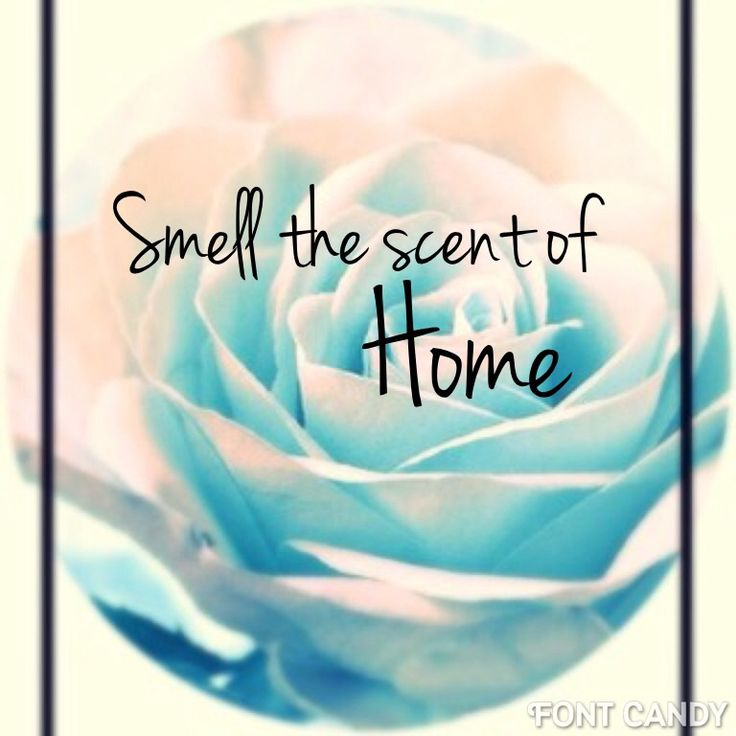 Smell the scent of blue roses =home By @Stefani Demi