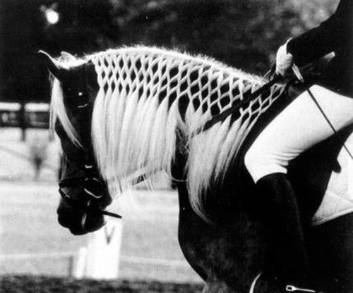 Awesome Horse coiffure