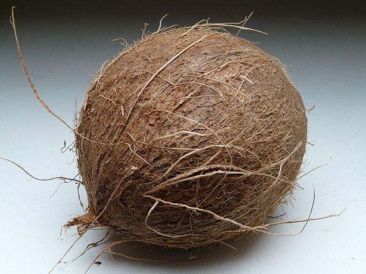 die schale der kokosnuss