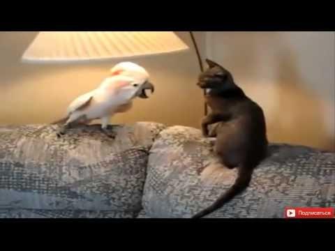 Подборка приколов с разными животными - ну очень смешное видео Youtube!