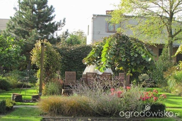 Pokażę nasz ogród - strona 304 - Forum ogrodnicze - Ogrodowisko