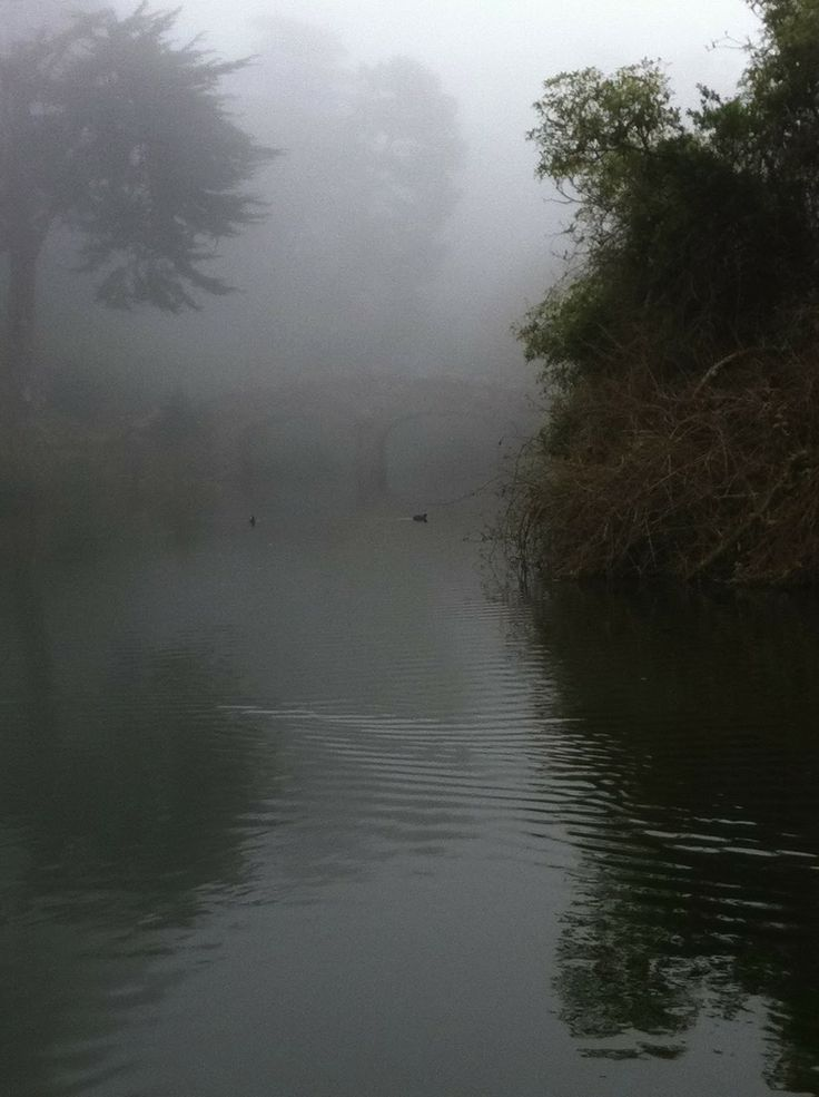 San Francisco Fog Map Live%0A Seeks Ghosts  San Francisco u    s Ghost of Stow Lake