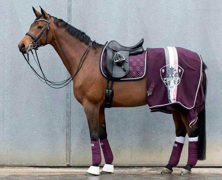 Pin Uživatele Mekashiku ღ Na N 225 Stěnce Horse Tack