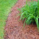 El acolchado, mantillo o mulching para la huerta ecológica ecoagricultor.com