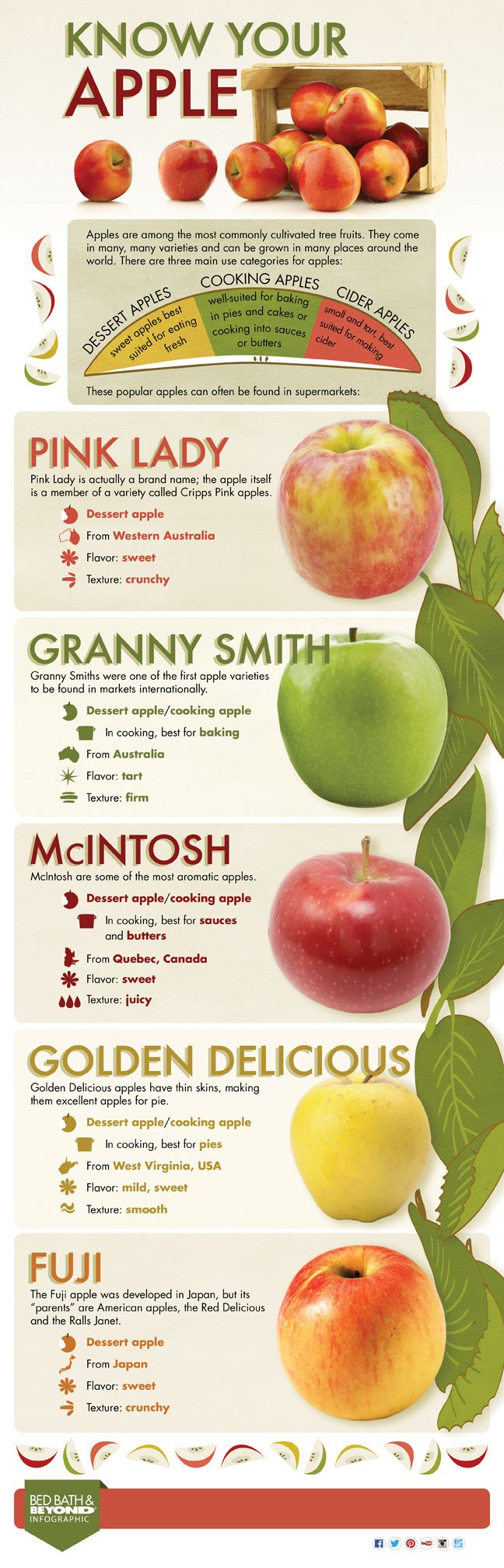 Know Your Apple [Infographic] -Above & BeyondAbove & Beyond | Above & Beyond, the blog from Bed Bath & Beyond, features cooking, recipes, food, entertaining, gift ideas, home decor, organizing advice, and more ideas and inspiration!