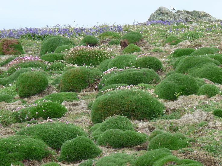 There is a real variety of vegetation communitie acros the island including these beautiful mosses