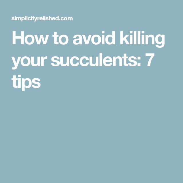 How to avoid killing your succulents: 7 tips