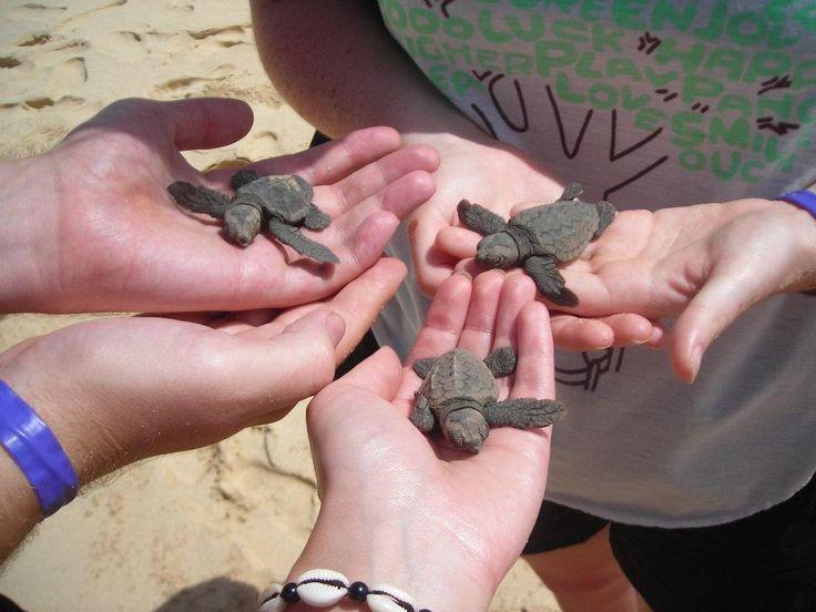 Turtle conservation - Cape Verde