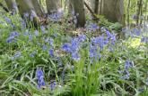 Welcome to the White Cliffs Countryside Project Page - NEW Lyminge Forest