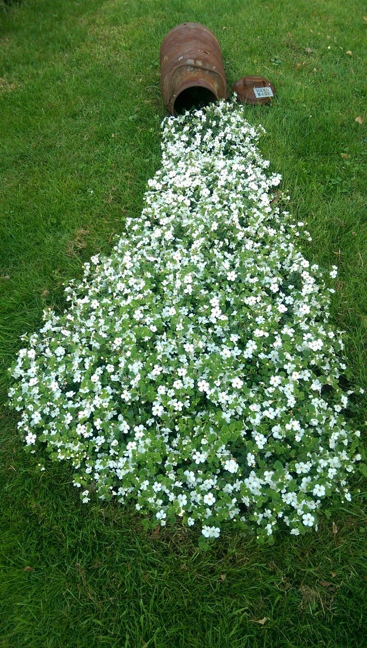 Milchkanne flei iges lieschen garten deko haus for Garten ideen blumen