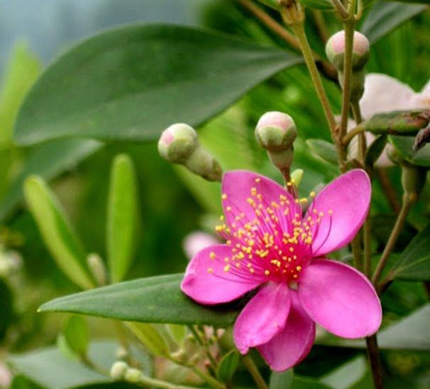 myrtle flower; means love & marriage- part of a bouquet tattoo...?
