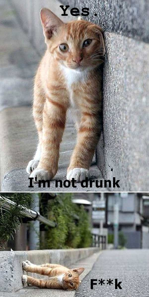 yes i'm not drunk kitty