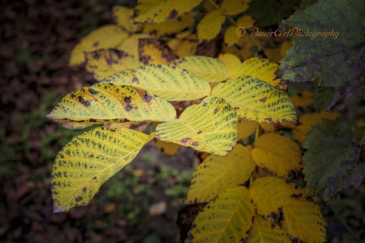https://flic.kr/p/MoPFqG | Autumn www.emlekkepfotografia.hu