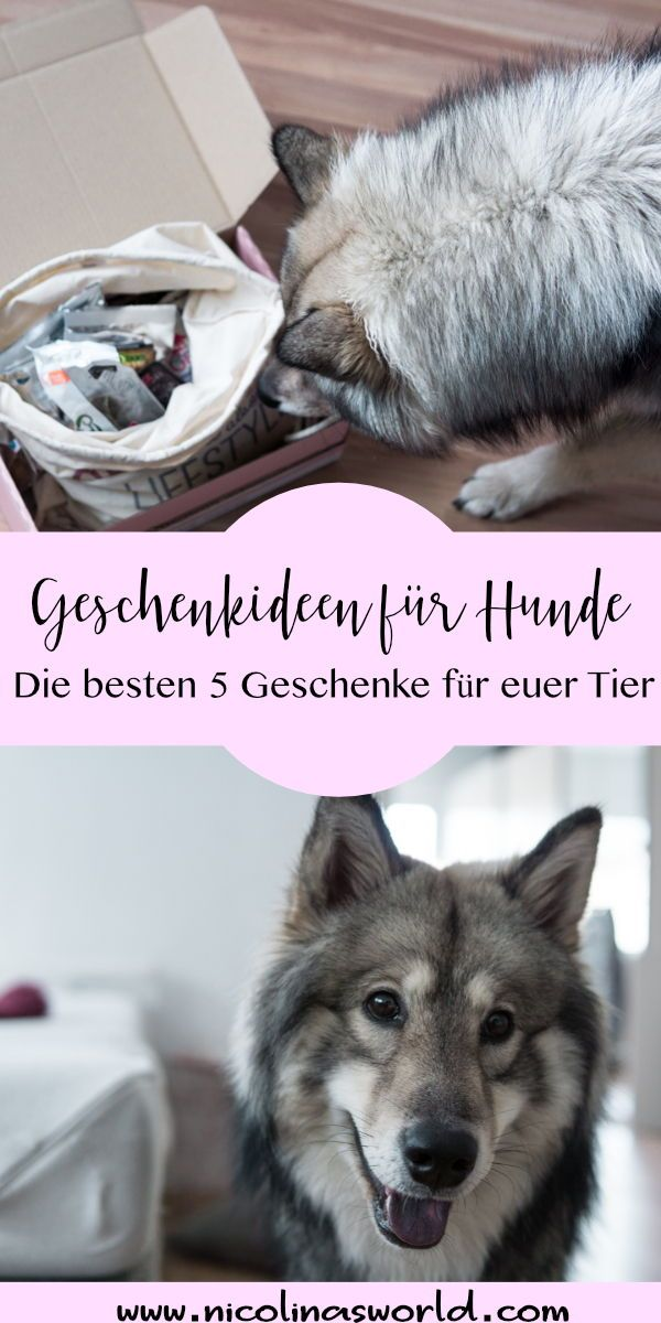 Anzeige Weihnachtsgeschenke Fur Hunde Mit Zookauf Shop Weihnachtsgeschenke Fur Hunde Hunde Und Hund Geschenke