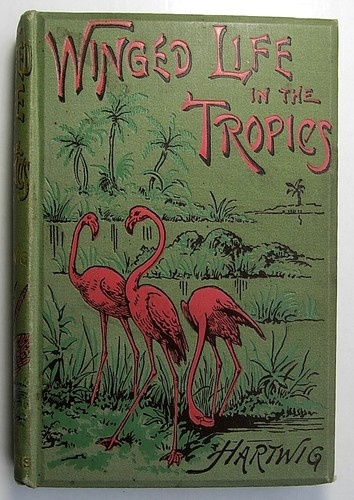 Vintage 1887 Wild TROPICAL BIRDS & INSECTS book with Flamingos on the cover!