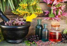 20 Hierbas curativas que puedes cultivar en casa