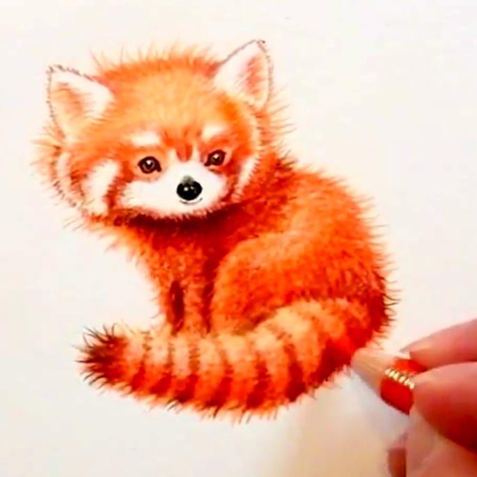 Zum Internationalredpandaday Zeige Ich Euch Meinen Katzenbar Den Ich Bereits Letztes Jahr Fur Youtube Gezeichnet Habe Un Katze Zeichnen Katzenbar Katze Malen