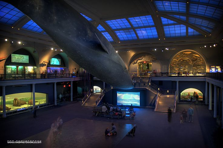 Hall of Ocean Life, Natural History Museum, NYC