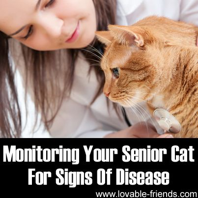 Monitoring Your Senior Cat For Signs Of Disease/Wish I'd had this with my last cat. I would have know to take her to the vet sooner. :(