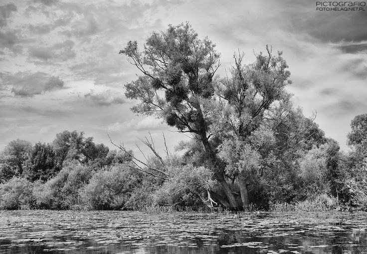 Pictografio: Odra river scenery #2