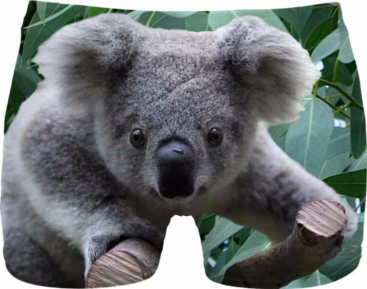 Check out my new product https://www.rageon.com/products/koala-and-eucalyptus-men-underwear?aff=BWeX on RageOn!
