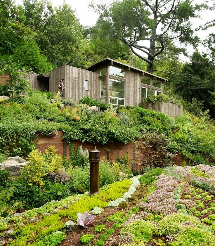 Can I live here, pleeease!Mills Valley, Artists Studios, Small Cabin, Valley Cabin, Dreams, Feldman Architecture, Green Roof, House, Yoga Spaces