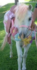 Ponies for parties, carriage rides, miniature horse rides Southern California