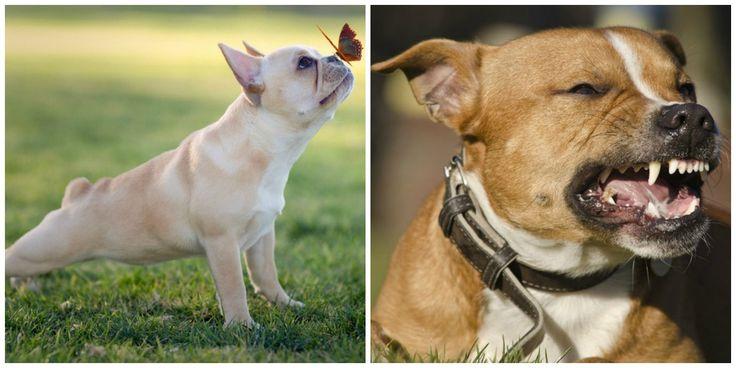 """Fortsetzung zum Artikel """"Hunde sind die geborenen Yogis"""": Artgerechte Haltung, Krankheiten bei Hunden, Verhaltensstörungen. Der Mensch macht Problemhunde."""