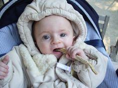 La racine de guimauve au secours des gencives de bébé.....et des oreilles de maman!