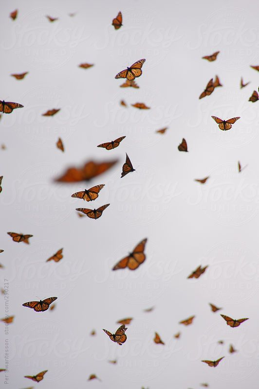 Swarming Monarch Butterflies By Per Swantesson Butterfly Wallpaper Iphone Aesthetic Iphone