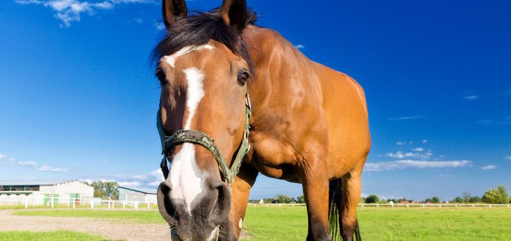 Sommige dingen moet je niet ingewikkelder maken dan dat ze zijn. Vliegenspray voor paarden is bijvoorbeeld makkelijk zelf te maken.